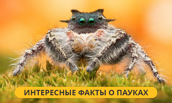 Интересные факты о пауках + Видео