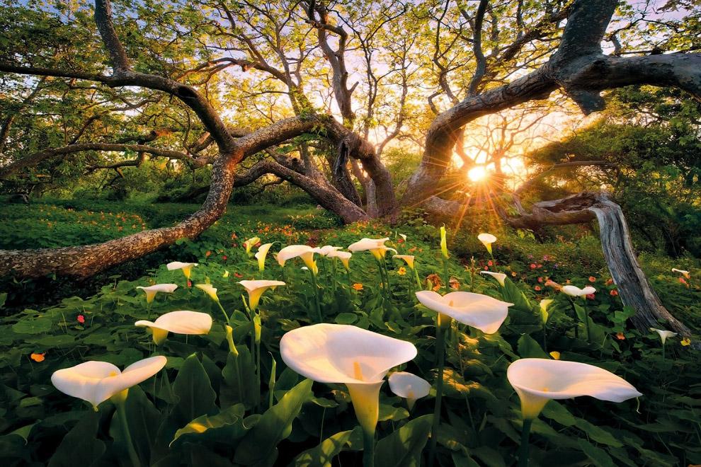 фото удивительные пейзажи когда