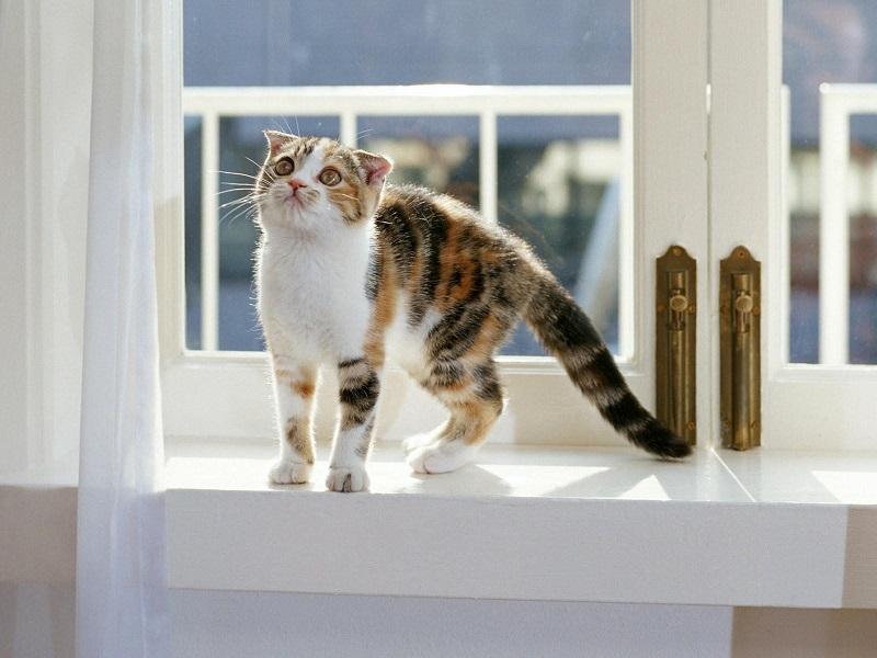 Как кошка Шапокляк познала фэн шуй и вывела из равновесия наших соседей
