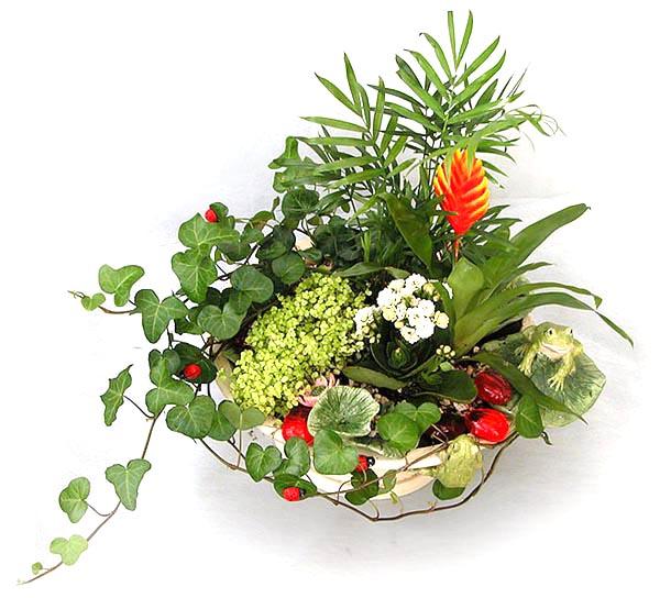 Растения — обереги.
