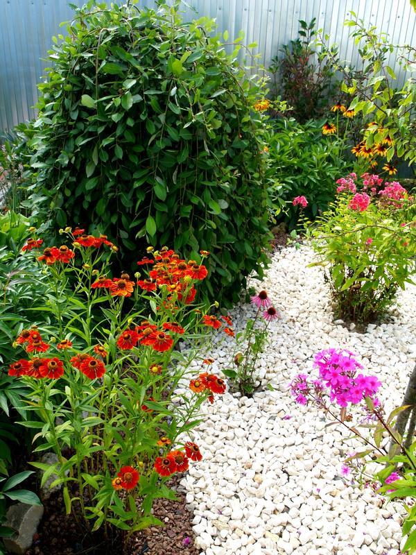 Приглашаю снова в гости в мой маленький цветущий сад…
