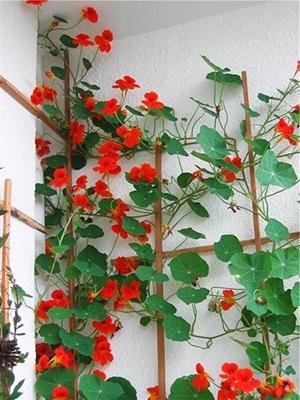 ДЛЯ УЧАСТКА Самые неприхотливые цветы для балкона цветущие все лето поделки для сада,полезные советы,разное