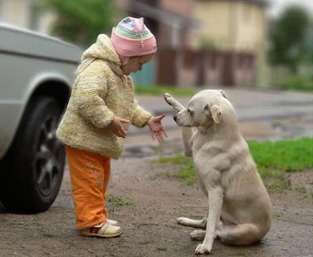 История о малыше и собаке