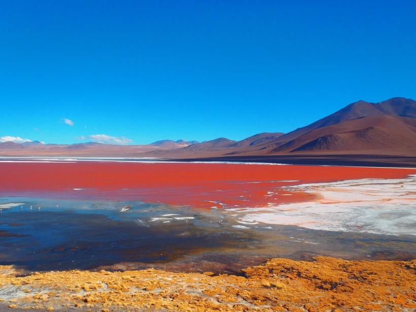 Озеро Лагуна-Колорадо и его потрясающие обитатели, которых мы могли потерять навсегда