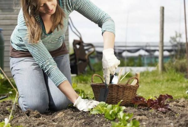 Как вырастить урожай, не потратив ни копейки: 10 разумных советов.