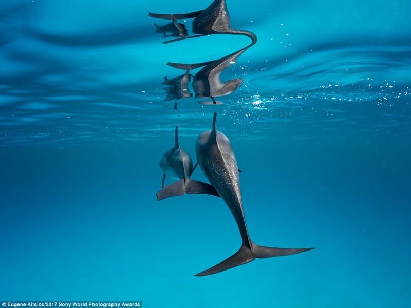Семья. Дельфиниха с дельфиненком у берегов Багам искусство, конкурс, красота, фото
