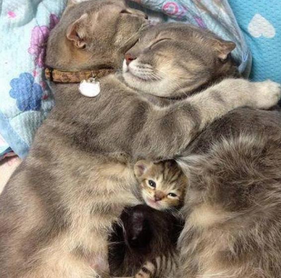 Это любовь: невероятно трогательные кошачьи семьи, которые не оставят вас равнодушными