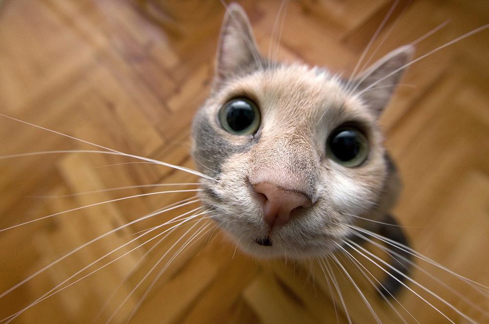 Бровями прикольные, прикольные фото и картинки про котов