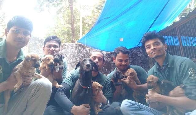 люди спасли щенков