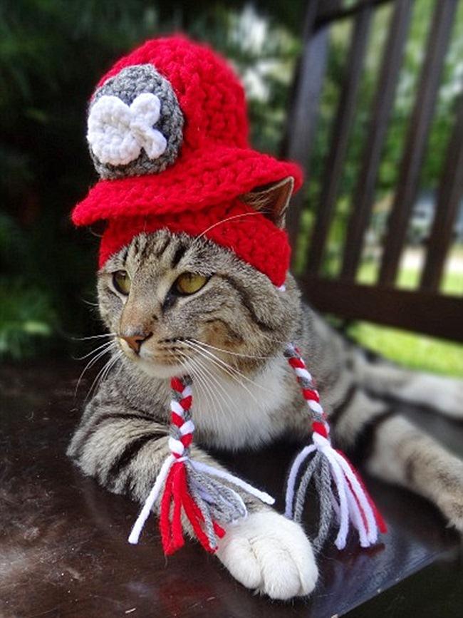 шапки с кошками картинки видела