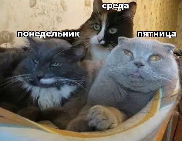 Если бы дни недели были котами