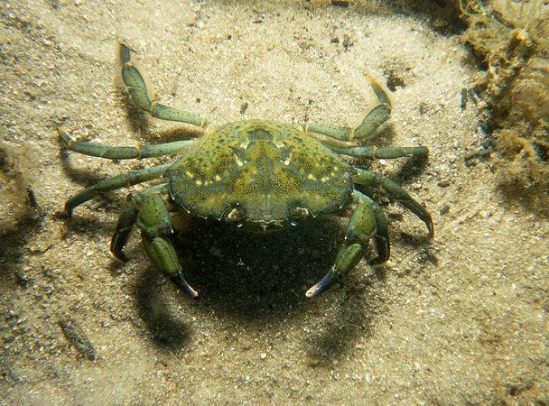 Экосистема и пять пришлых видов