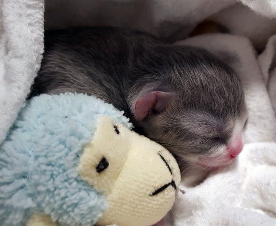 «Шатающийся» котенок нашел любящий дом и чувствует себя в безопасности