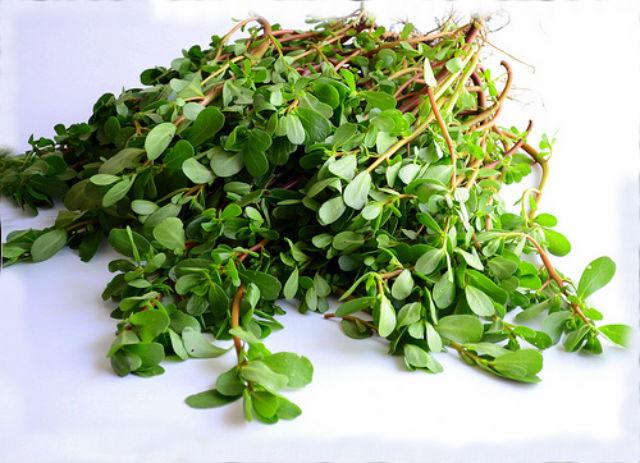 портулак огородный маринованный рецепты приготовления