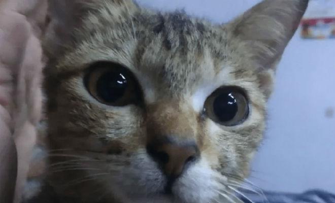 Кот перегрыз зарядку, а потом в качестве извинения принес змею животные,зарядка,змея,кот,Пространство
