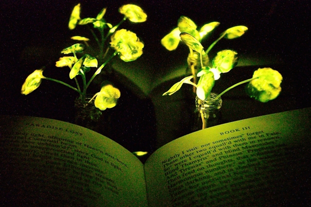 Растения вместо лампочек