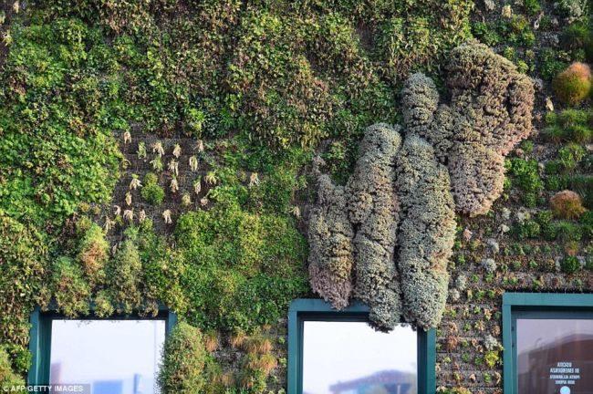 Fiordaliso — уникальный вертикальный сад в Италии Италия,ландшафтный дизайн,рекорды