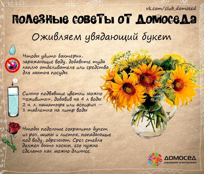 выделяю полезные советы про цветы с картинками льется