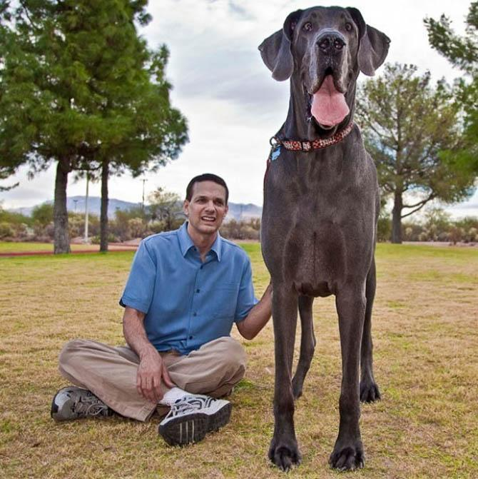 картинки про самую большую собаку сами увидите