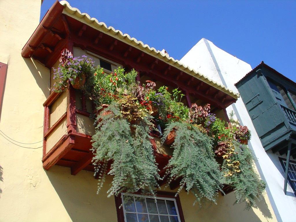 Вертикальное озеленение балкона: 20 идей и 10 советов балконы