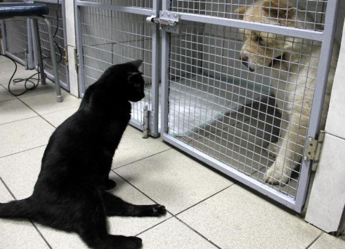 Кот, который не может ходить, живет в ветеринарной клинике в Перми и утешает больных животных