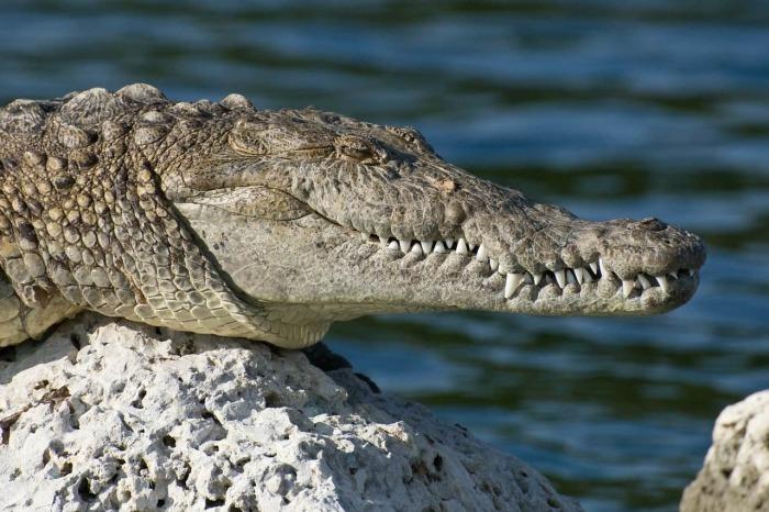Зачем в древности ели помёт крокодила и делали кровопускания, или Самые необычные противозачаточные средства прошлого