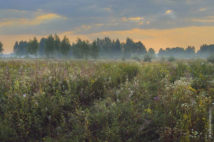 Фото Сергея Странника - август 2