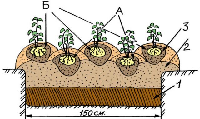 Урожайные эксперименты: сажаем картофель китайским методом