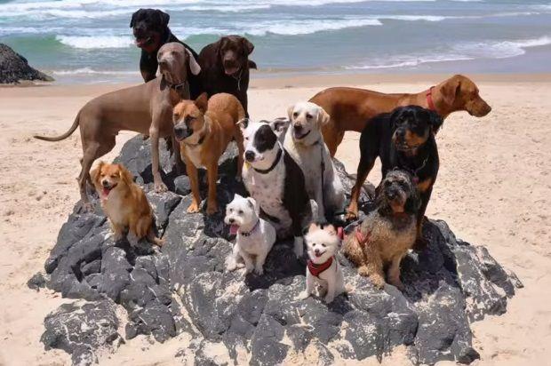 Всем бы такую собачью жизнь!