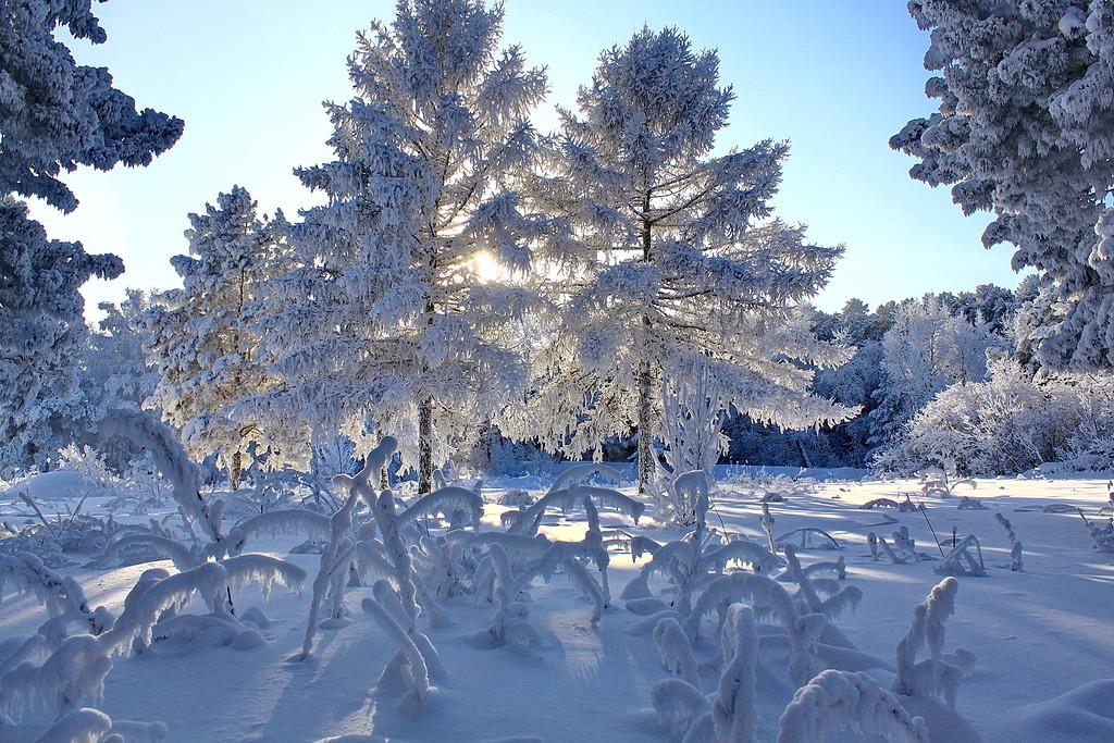 Январское утро. Звенит синева...