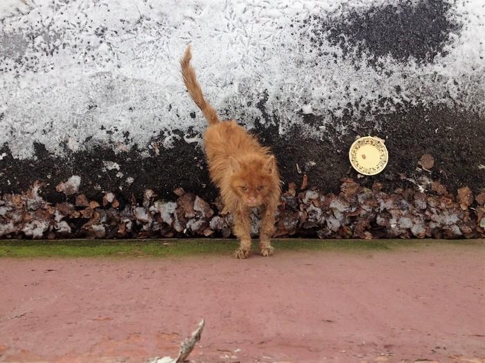 """""""Кот в аквариуме!"""" Однажды парень выглянул в окно и чуть не упал… Там стоял ободранный кот, который недавно был красавцем"""
