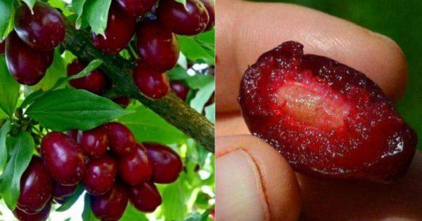 Эти ягоды спасают миллионы л…