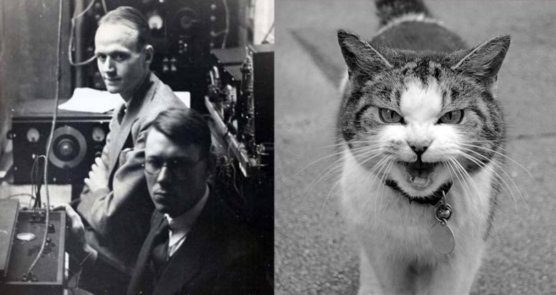 Как ученые превратили кота в…