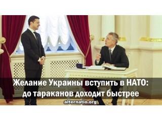 Желание Украины вступить в НАТО: до тараканов доходит быстрее украина