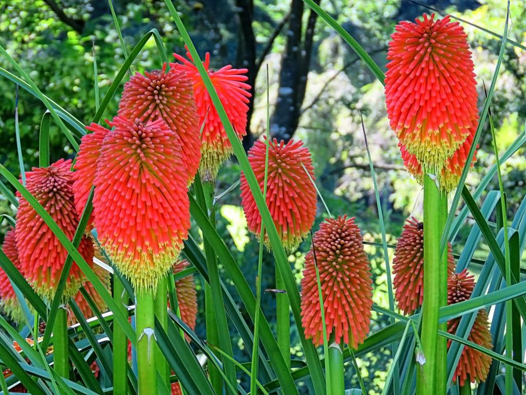 Неопознанные мною растения и цветы (большая серия)
