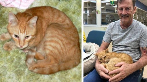 Мужчина нашел своего любимого кота спустя 14 лет