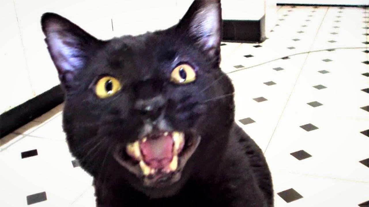 Говорящие коты и песня про бабу
