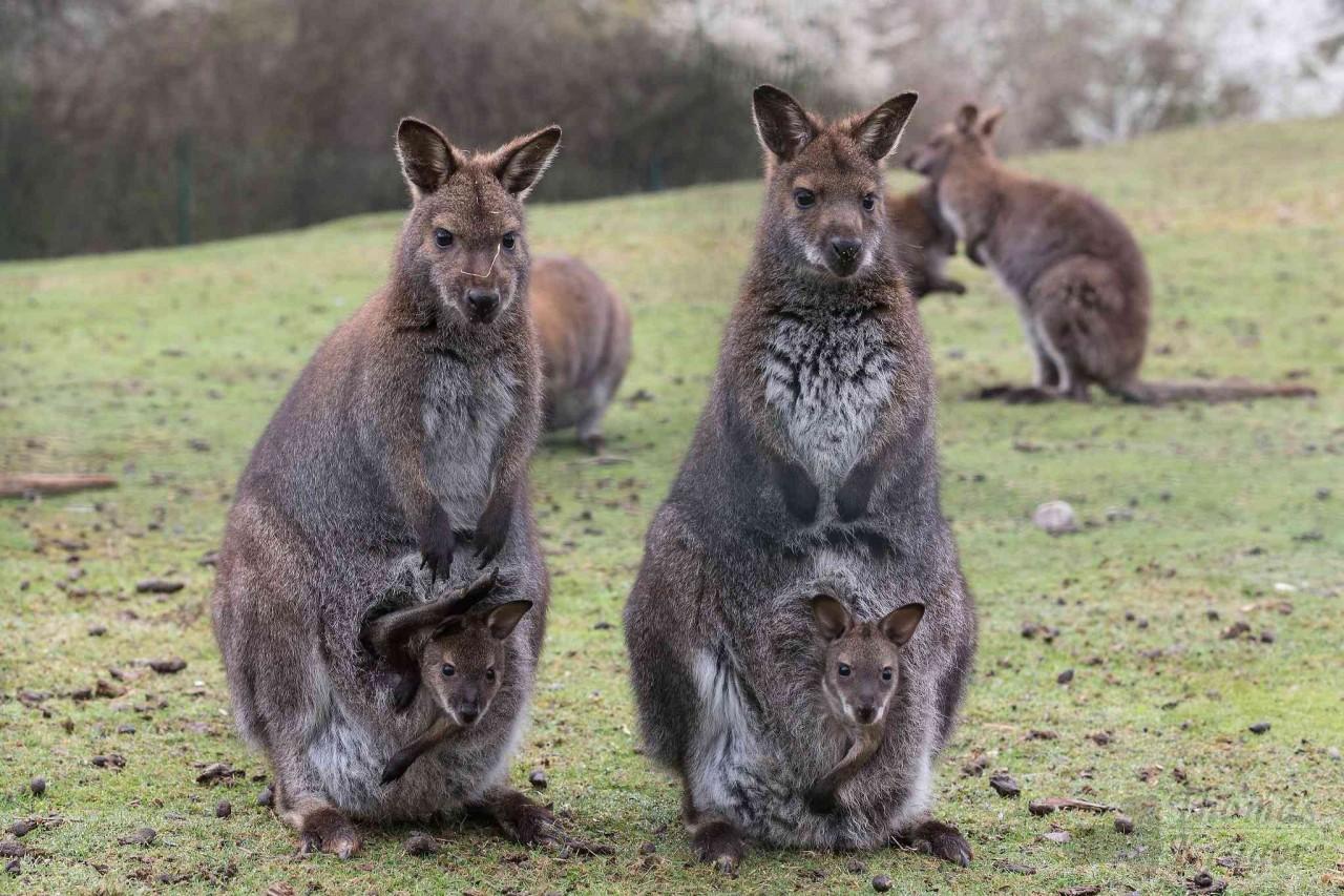 10 тайн природы Австралии