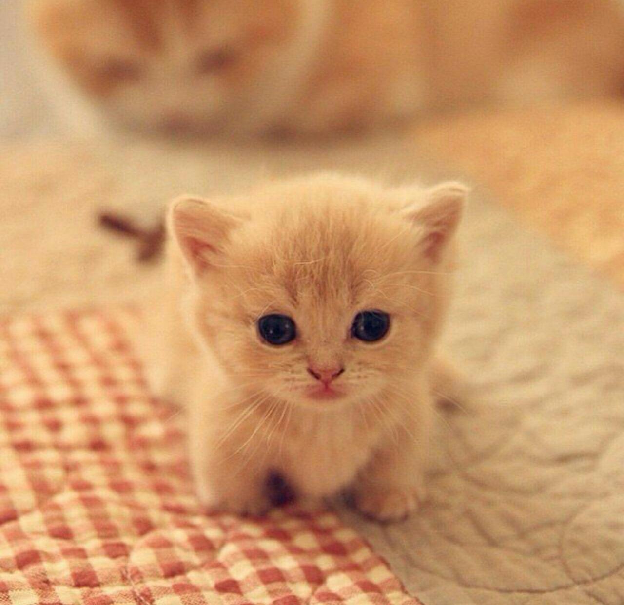 природа покажи картинки кошек пожалуйста картинка, где