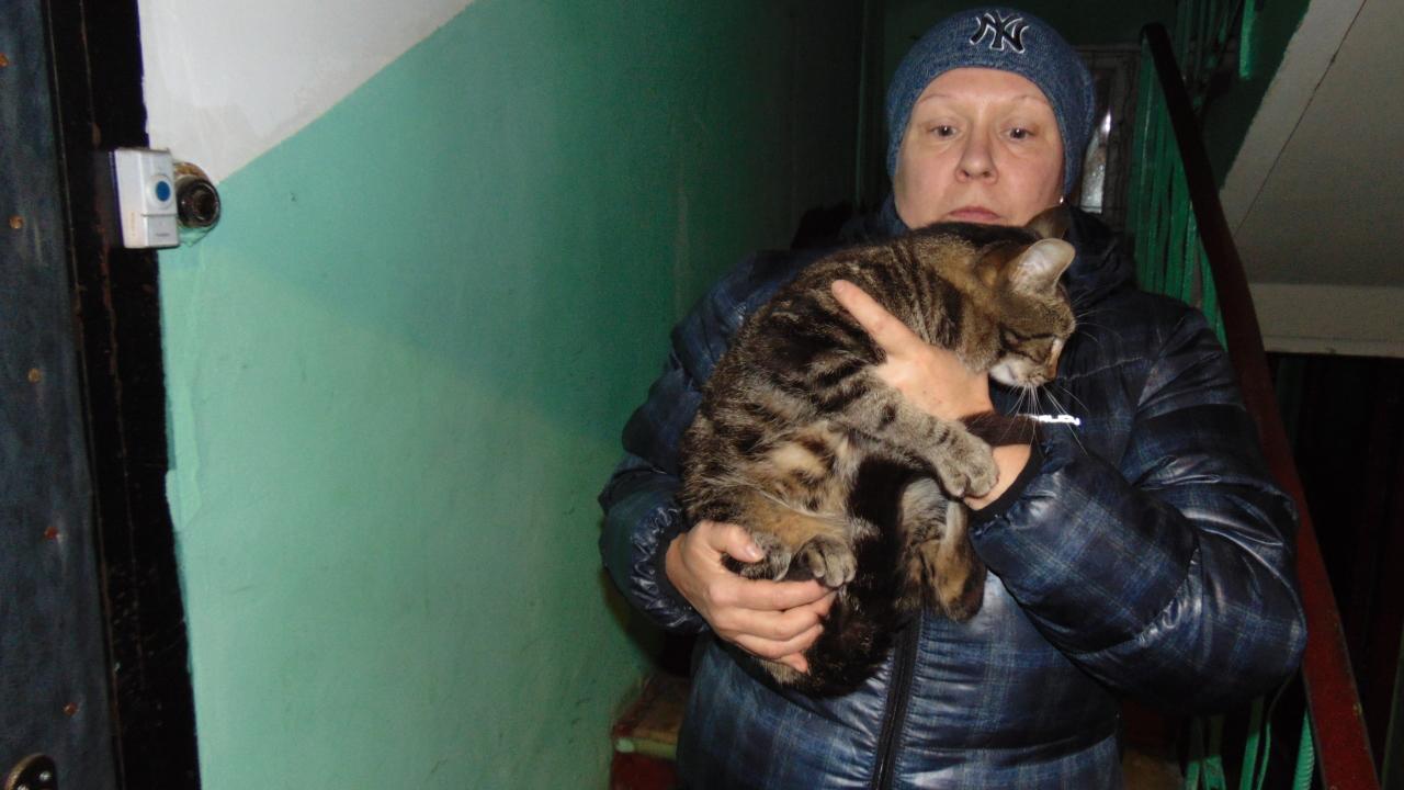 Маленький котик срочно ищет любящий дом.