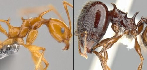ТОП-10: Недавно обнаруженные и ныне живущие виды животных