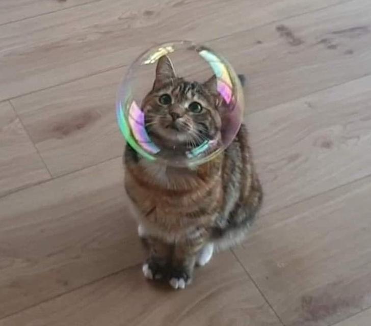 Голова во рту, кот в мыльном пузыре: фото, на которых время остановилось