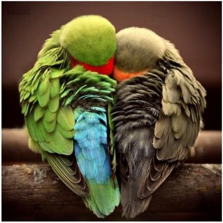 Интимная история приключилась с попугаем