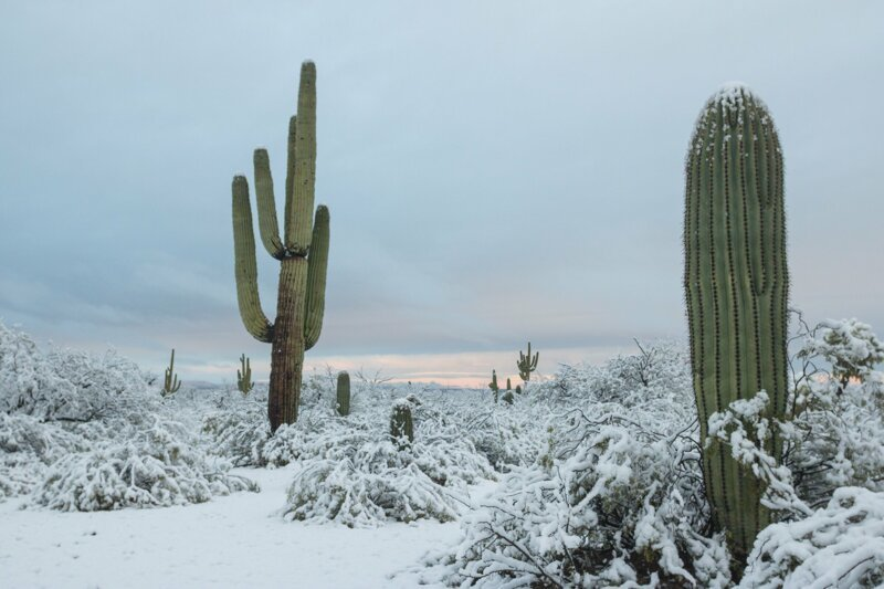 Кактусы в сугробах: в пустыне Аризоны выпал снег аризона, глобальное потепление, кактусы в снегу, красота, пустыня Сонора, снег, сюрреализм наяву, экология