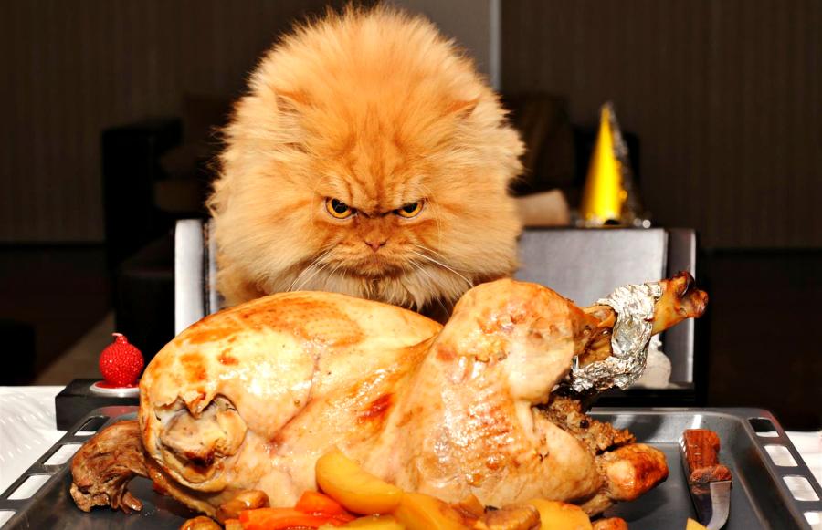 Днем, смешные картинки с животными и надписями приятного аппетита