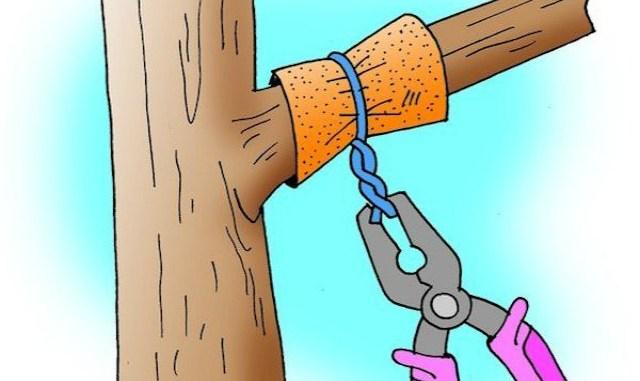 Способы заставить деревья пл…