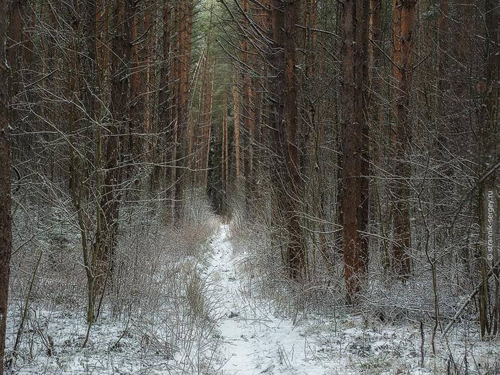 Фото Сергея Странника - декабрь 1