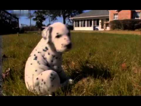 Введение в собаковедение  101 Dogs   Часть 10 Animal Planet