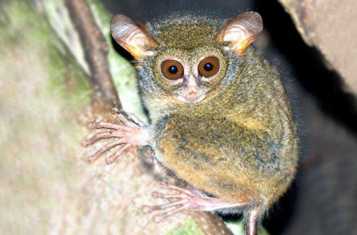 Виды, пополнившие фауну в 2017 году