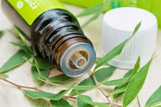 Масло чайного дерева – источник здоровья в домашней аптечке